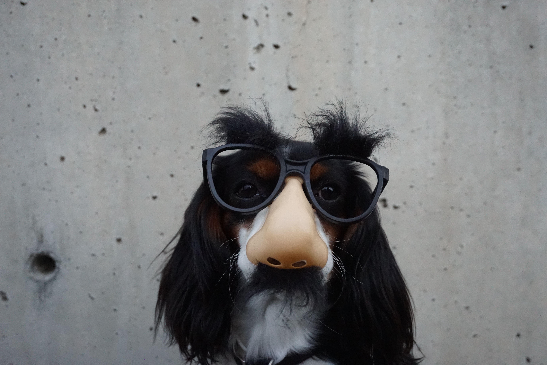 Grouch Dog